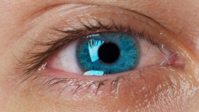W laboratorium wyhodowano działające gruczoły łzowe