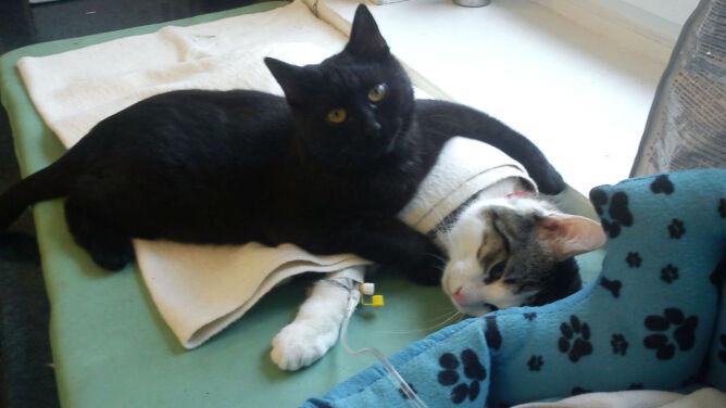 Rademenes. Czarny kot, który przynosi<br />szczęście chorym zwierzętom