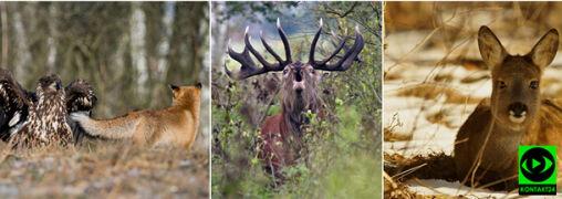 Niezwykłe zdjęcia dzikich zwierząt w obiektywie Reportera 24