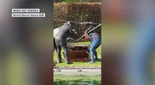 Akcja wyciągania bobra z basenu